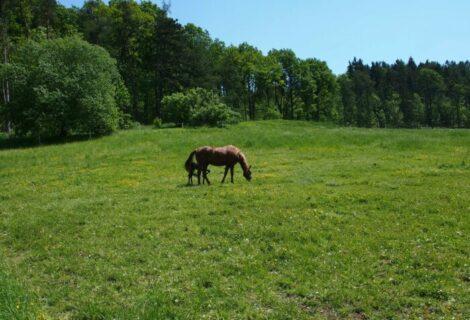 Update Pferderecht: Haftung des Pferdepensionsbetreibers bei fehlerhafter Eingliederung in eine bestehende Herde